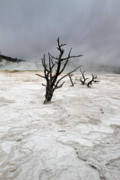 Mammoth Photos - Yellowstone Mammoth hot springs by Pierre Leclerc
