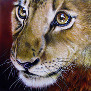 Wildlife Art Painting Posters - Young Lion Poster by Jurek Zamoyski