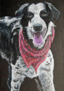 Collie Drawings Posters - Zack Poster by Beverly Fuqua
