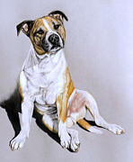 Staffordshire Bull Terrier Paintings - Zak by Caroline Collinson