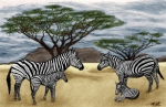 Zebra Drawings - Zebra African Outback  by Peter Piatt