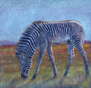 Zebra Drawings - Zebra Foal ... by Svetlana Ledneva-Schukina