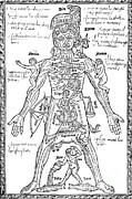 Astrological Art Posters - Zodiac Man, Medical Astrology Poster by Science Source