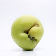 Agriculture Art - Apple by Bernard Jaubert