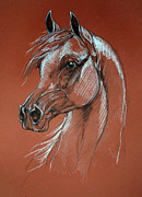 Horse Drawing Pastels Posters - Arabian Horse Drawing Poster by Angel  Tarantella