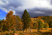 Autumn Prints Prints - Rocky Mountain Fall Print by Mark Smith