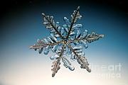 Snowflake Print by Ted Kinsman