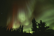 Aurorae Acrylic Prints - A Brilliant Display Of Aurorae Acrylic Print by Paul Nicklen