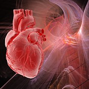 Physiology Digital Art - Human Heart, Artwork by Laguna Design