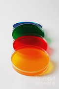 Petri Framed Prints - Petri Dish Framed Print by Photo Researchers, Inc.