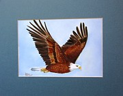 Bald Eagle. Ceramics - 1149 Bold Eagle   flying by Wilma Manhardt
