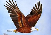 Hand Painted Porcelain Ceramics Posters - 1149b  Bold Eagle 3 Poster by Wilma Manhardt