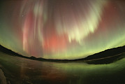 Fisheye Posters - A Brilliant Display Of Aurorae Poster by Paul Nicklen