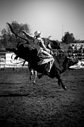 Cowgirl Photos - Bull Rider by Rick Rowland