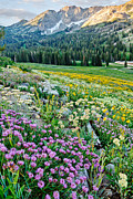 Meadows Art - Wasatch Mountains Utah by Utah Images