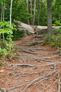 John Prichard - 12711 Root Pathway