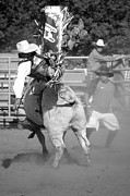 South Dakota Photos - Bull Rider by Rick Rowland