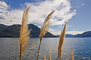 Switzerland Art - Lake Maggiore by Joana Kruse