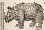 Rhinoceros Framed Prints - 1551 Gesner Armoured Rhino After Durer Framed Print by Paul D Stewart