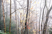 Williams Photos - Autumn Monongahela National Forest by Thomas R Fletcher