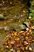Fall Along Williams River Print by Thomas R Fletcher