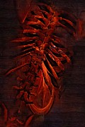 Physical Body Digital Art Framed Prints - Torso Skeleton Framed Print by Joseph Ventura