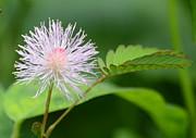 JISS JOSEPH - flower