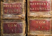 Books Of The Bible Framed Prints - 1749 Buffon Histoire Naturelle First Eds. Framed Print by Paul D Stewart