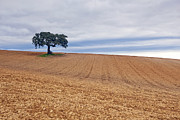 Alentejo Photos - Alentejo by Andre Goncalves