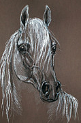 Horse Drawing Framed Prints - Arabian Horse  Framed Print by Angel  Tarantella