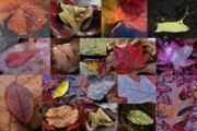Abstract Leaf Prints - 18 Examples of Beautiful and Inspiring Tree Leaf Photography Print by Juergen Roth