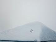 18 Penguins Sitting On Iceberg Print by Sabrina Mae