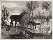 Sea And Sky Posters - 1837 Extinct Prehistoric Animals Paris Poster by Paul D Stewart