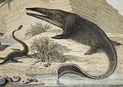 Error Framed Prints - 1862 Hawkins Icthyosaur & Plesiosaur. Framed Print by Paul D Stewart