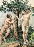 Pre-19th Framed Prints - 1863 Adam And Eve From Zoology Textbook Framed Print by Paul D Stewart