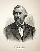 Haeckel Prints - 1880s Ernst Haeckel German Engraving Print by Paul D Stewart