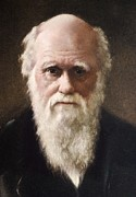 Origins Of Life Prints - 1881 Charles Darwin Face Portrait Print by Paul D Stewart