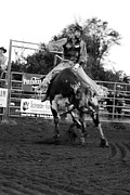 Badlands Photos - Bull Rider by Rick Rowland