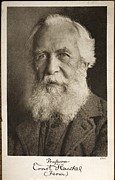 Haeckel Prints - 1910 Ernst Haeckel Photographic Portrait Print by Paul D Stewart