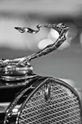 Historic Vehicle Photo Prints - 1930 Cadillac Roadster Hood Ornament 2 Print by Jill Reger