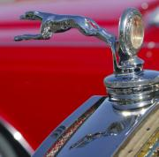 Greyhound Photos - 1930 Ford Model A Hood Ornament by Jill Reger