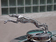 Greyhound Pyrography Prints - 1932 Lincoln Hood Ornament Print by Mary Smith