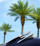 Abstract Palm Trees Photos - 1950 Oldsmobile Rocket 88 Convertible Hood Ornament and Palms by Jill Reger