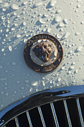 Roadster Photos - 1954 Jaguar XK120 Roadster Hood Emblem by Jill Reger