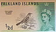 Old Stamps Framed Prints - 1960 Falkland Islands Thrush Stamp Framed Print by Bill Owen
