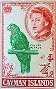 Old Stamps Framed Prints - 1962 Cayman Islands Parrot Stamp Framed Print by Bill Owen