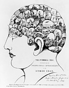 Strachan Framed Prints - 19th-century Phrenology Framed Print by Library Of Congress