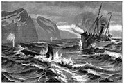 Ship Rough Sea Prints - 19th Century Whale Hunt Print by Cci Archives