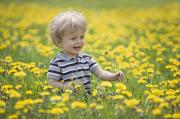 Relaxed Photo Framed Prints - 18-month-old Boy In Dandelion Field Framed Print by Susan Dykstra