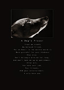 Greyhound Photo Posters - A Dogs Prayer Poster by Angela Rath